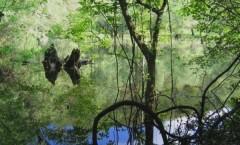 Rezervatia-naturala-Balta-Soimos